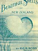 Beautiful Shells of New Zealand