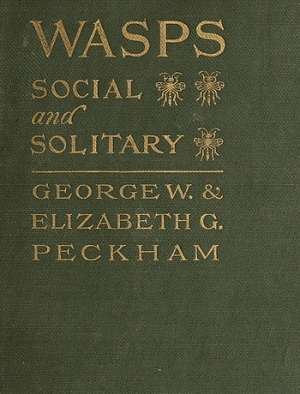 Wasps Social and Solitary