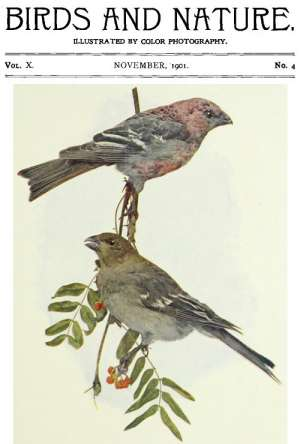 Birds and Nature, Vol. 10 No. 4 [November 1901]